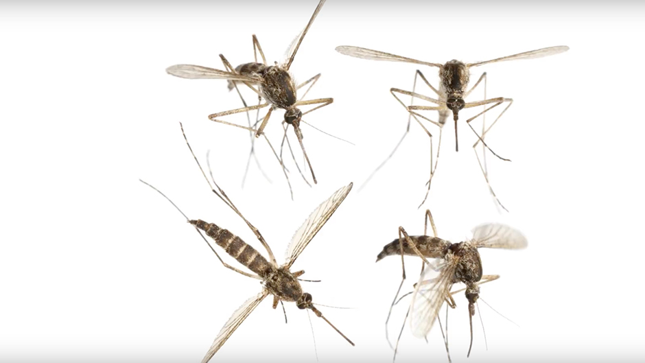 Video: Zika Vector Control