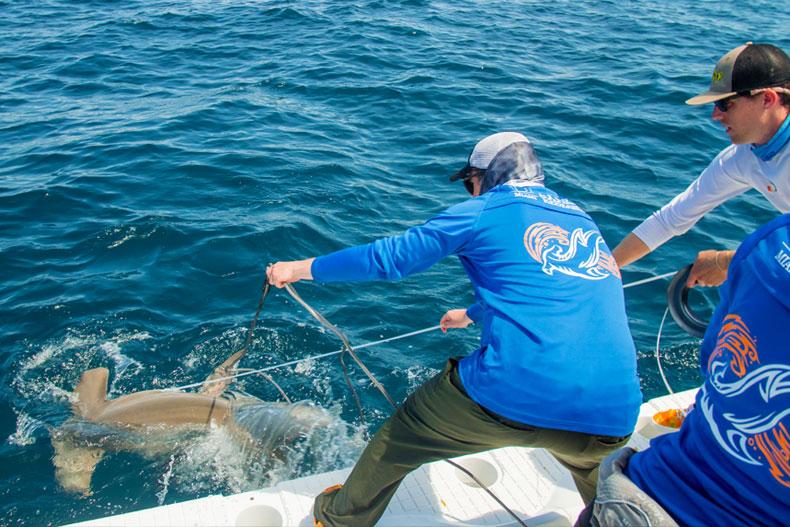 UM's Shark Guru