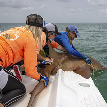 women researchers in UM's Shark Research Conservation program