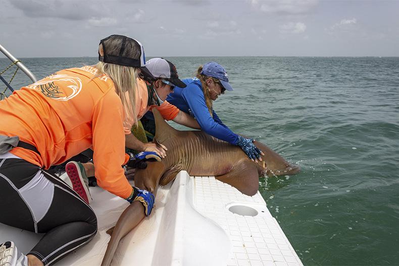 women researchers in UM's Shark Research Conservation program