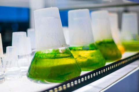 Aerosolization of algal toxins