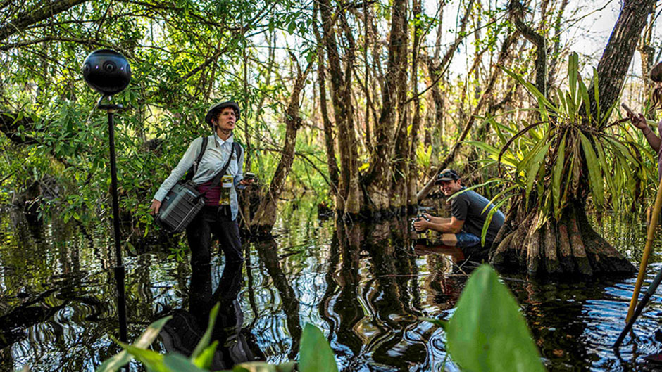 SwampScapes: A Journey Through the Everglades