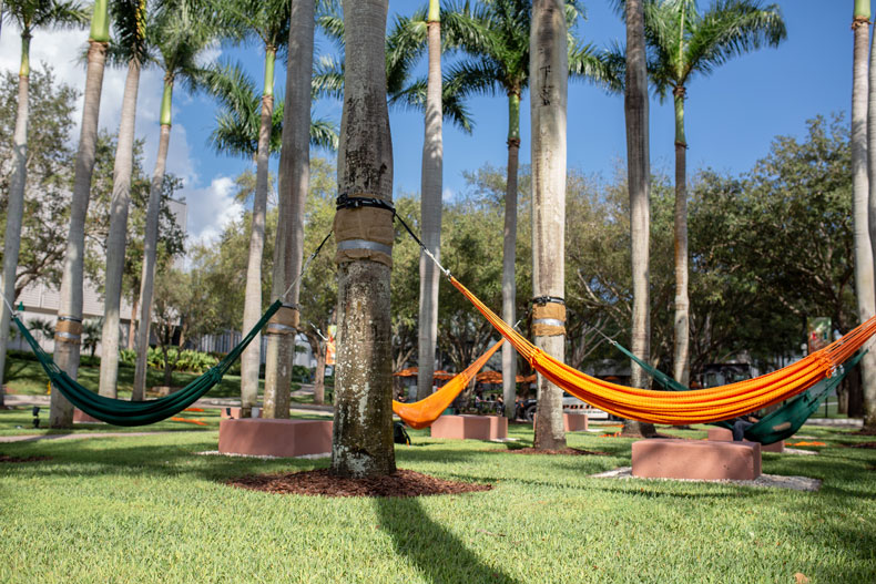 Hammocks strung between palm trees on campus