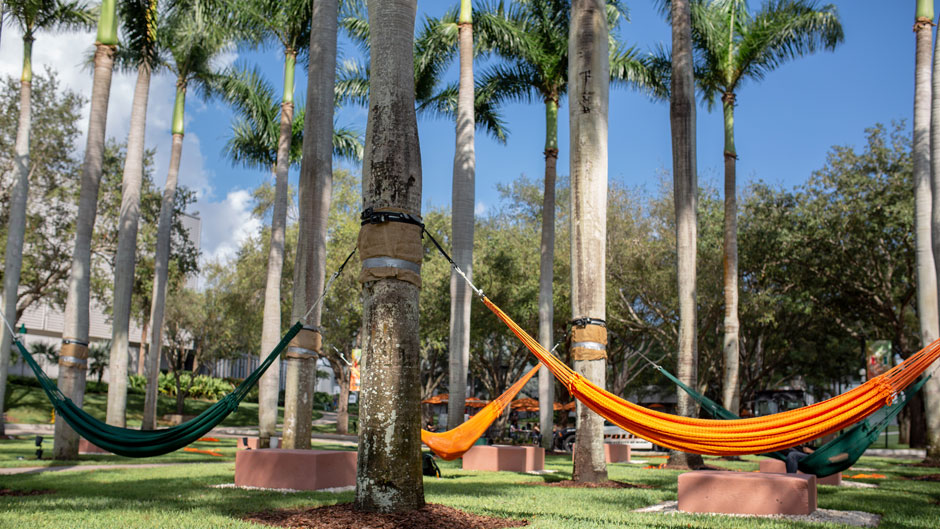 Hammocks strung between palm trees on campus