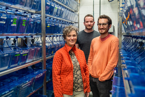 Flanked by (tanks of) zebrafish that enabled their study are, from left, researchers Julia Dallman, David M. James, and Robert A. Kozol.