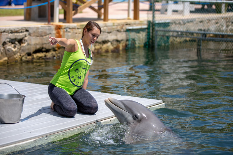 Student trains dolphin in the Marine Mammal Applied Behavior Analysis and Managed Care class.