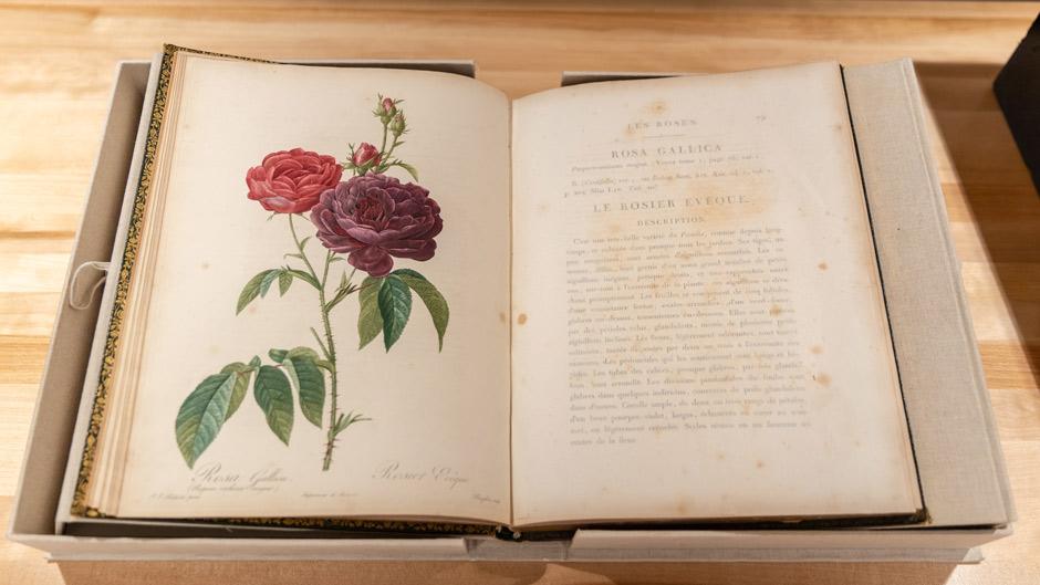 Le Roses