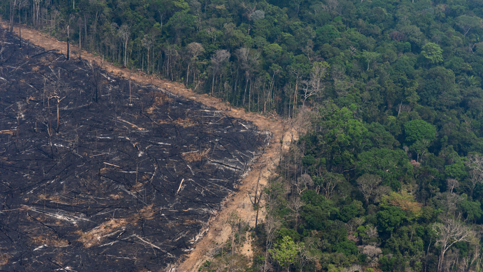 Amazon, Deforestation