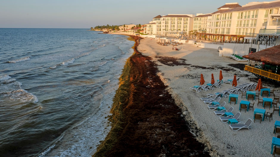 Sargassum seaweed covers a beach in Mexico earlier this summer. Photo: Victor Ruiz/Associated Press