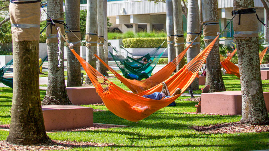 Hammocks on campus