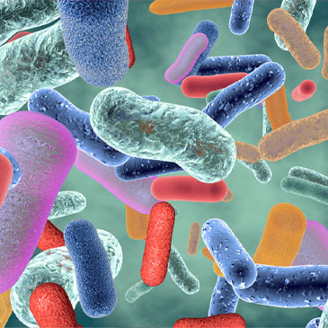 A healthy gut contains millions of beneficial bacteria that help our immune systems function.