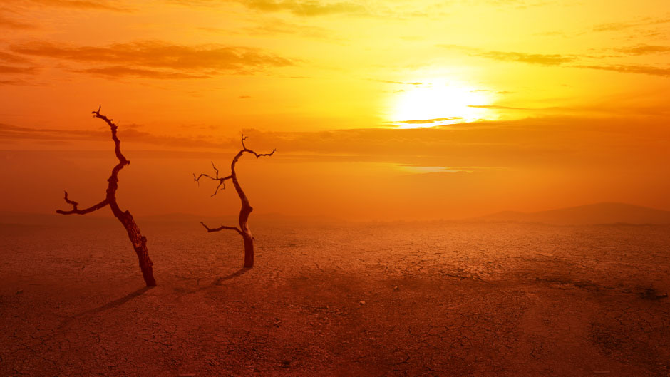 Stock image concept of heatwave on the desert with dead trees and glowing sun background.