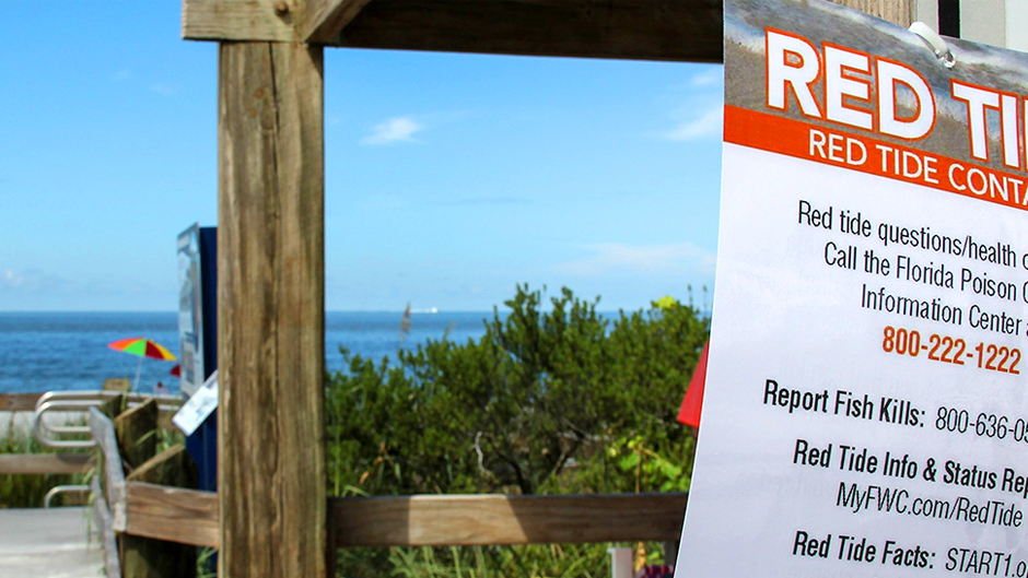 A sign warns of the effects of red tide at Bonita Beach. Photo: Peter E. Howard/University of Miami