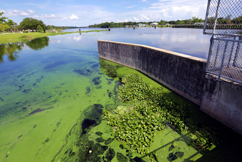 In this Thursday, July 12, 2018 file photo, an algae bloom appears on the Caloosahatchee River at the W.P. Franklin Lock and Dam in Alva, Fla. (AP Photo/Lynne Sladky)