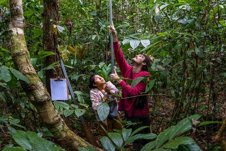 Peru tree research