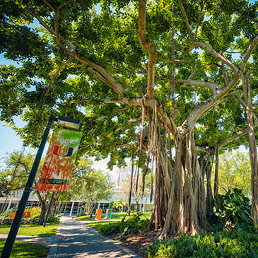 Miami Herbert's MBA Program continues to rise in Bloomberg Businessweek Rankings