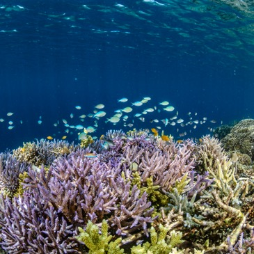 New report projects severe coral bleaching globally in this century