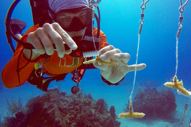 Scientists publish first large-scale census of coral heat tolerance